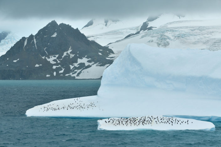 A group of chinstrap penguins. © Yves Adams